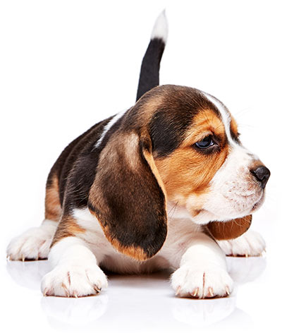 Atlanta Speed Hookup Companies That Test On Beagles Howling