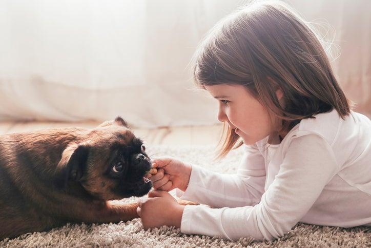 10 raças de cachorro ideais para famílias com crianças 7