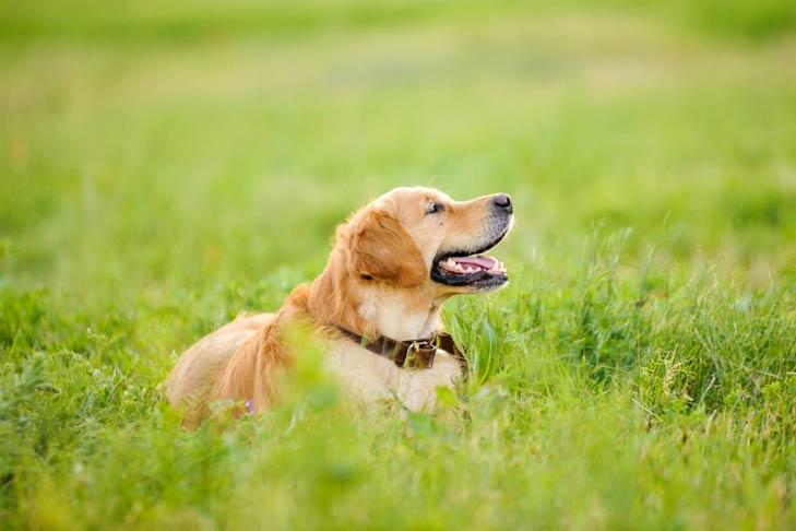 How Often Do Dogs Go Into Heat