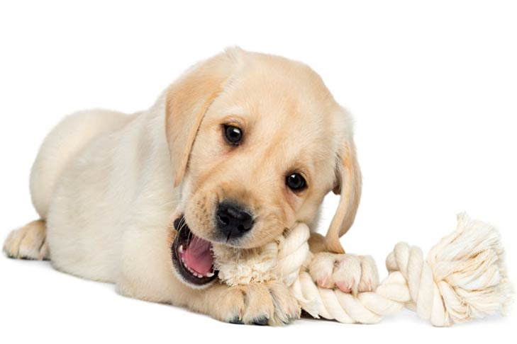 Best Toys For Teething Puppy