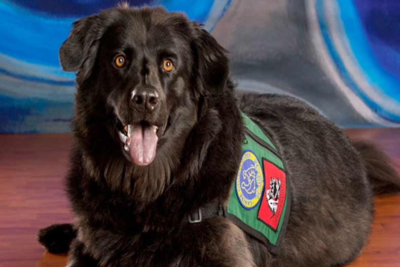 Therapy Dog Training & Certification