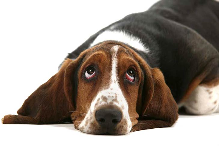 Dog Constipation: Causes, Diagnosis, and Treatment