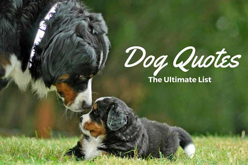 Dog Quotes We Rounded Up The Best Of The Best Delectable Quotes About Dog Friendship
