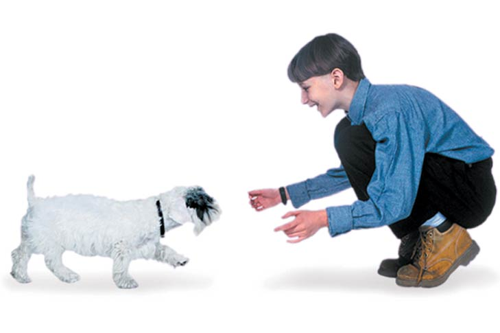 Teach Your Puppy These 5 Basic Commands