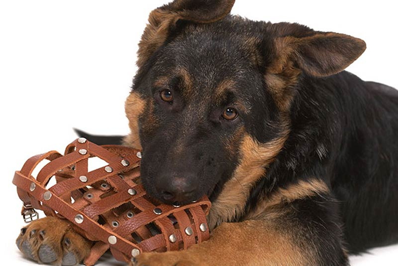 dog muzzles when why and how to use them
