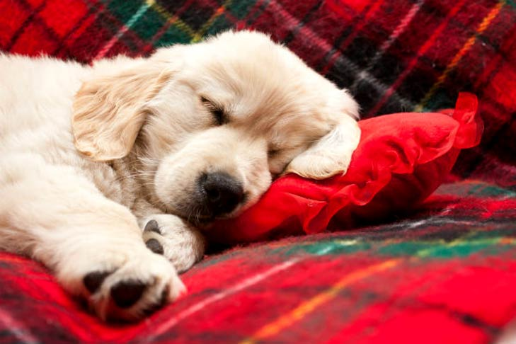 How much sleep should a puppies get at night