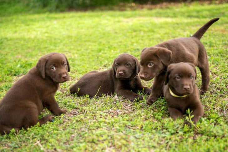 What Every Puppy Owner Needs To Know About Parvo In Puppies