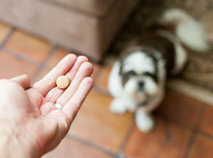 anti inflammatory medication for dogs