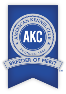 akc breeder of merit program american kennel club