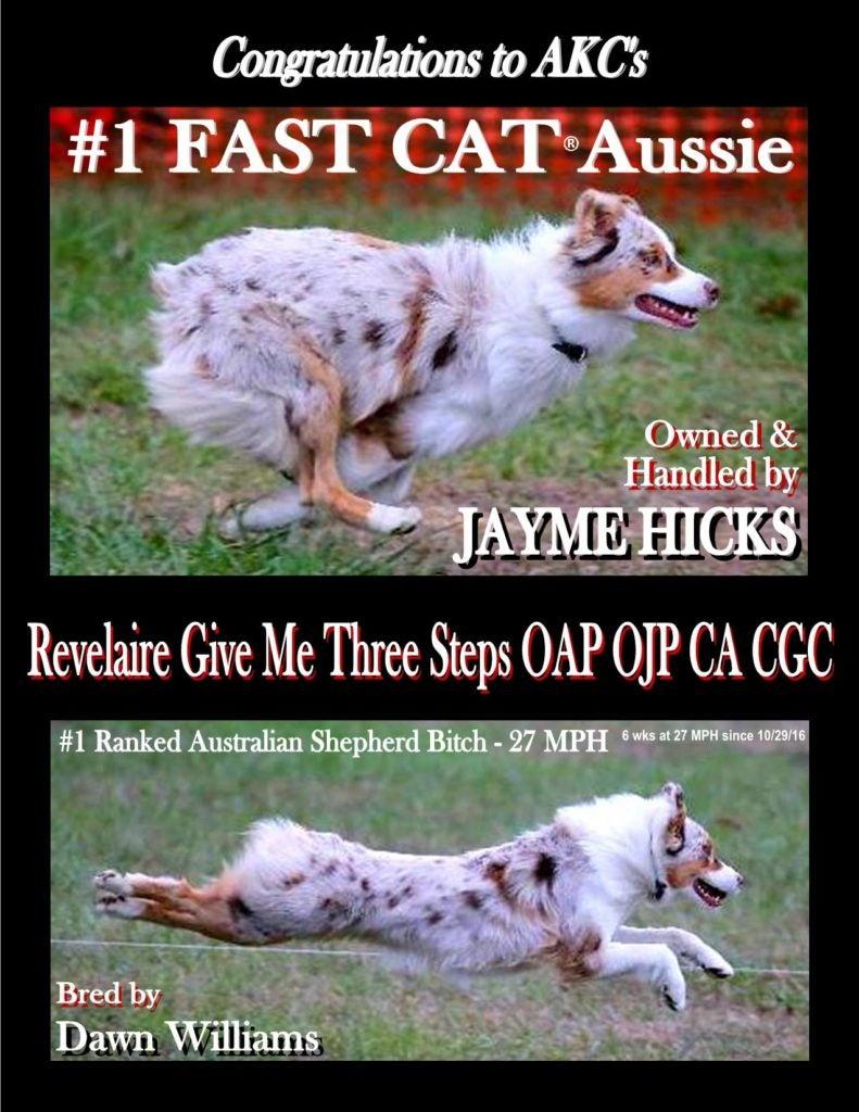 FAST CAT Aussie