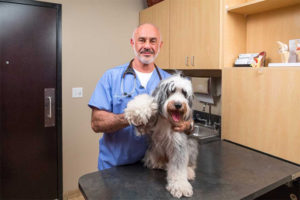 THE AMERICAN KENNEL CLUB APPOINTS DR. JERRY KLEIN CHIEF VETERINARY OFFICER