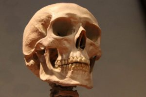 Public Education Educator Resources Anatomy and Physical 9-12 Skull