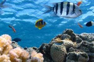Public Education Educator Resources Animal Habitats K-2 Fish