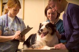 Public Education Educator Resources Careers in Dogs Vet