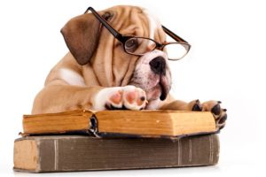 Public Education Educator Resources Bulldog Puppy Books