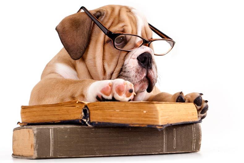 Public Education Educator Resources Bulldog Puppy Books