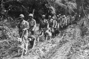 Public Education Educator Resources War Dogs