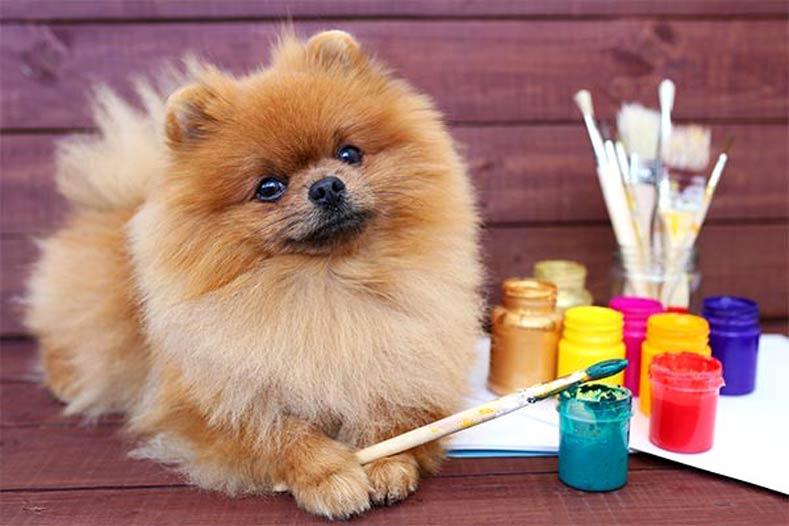 Odd Dogs Jobs Pomeranian Artist