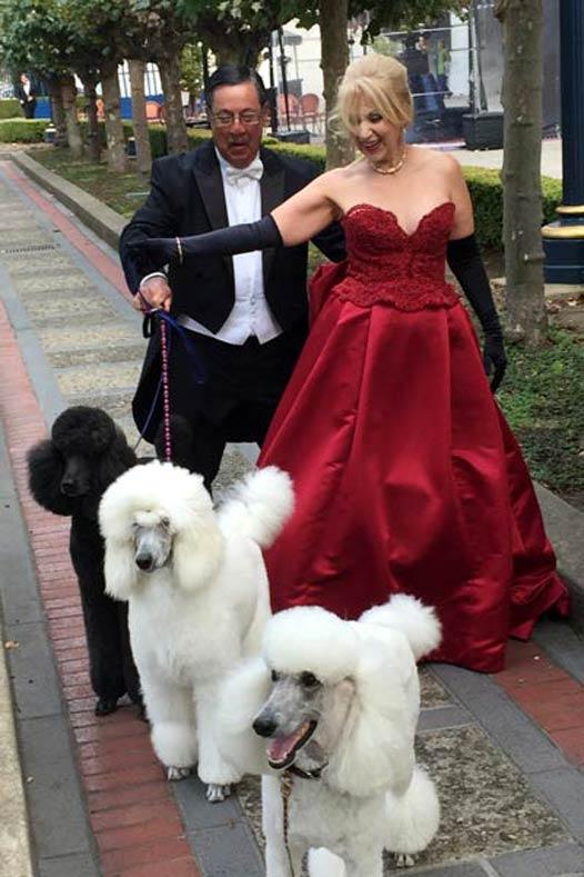 AKC Breeder Spotlight Oksana Fagenboym Rock 'N Rolla Poodles SF Opera Street
