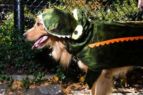 alligator_golden_480