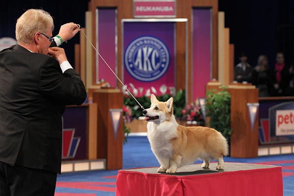 What Does a Ticket to the 2017 AKC National Championship Get