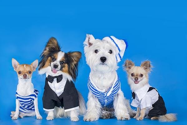 dogs-on-blue-body