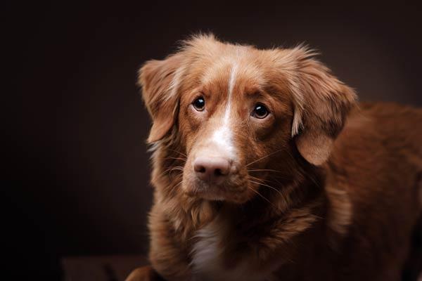 expressivedogbodyimage.jpg