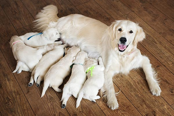 Necessary words... canine sperm motility necessary for pregnancy happens