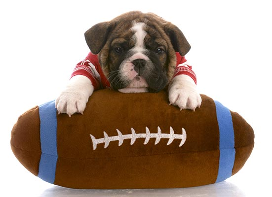 football-puppy-body.jpg