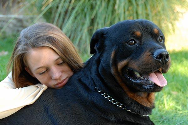 shelter-rottweiler