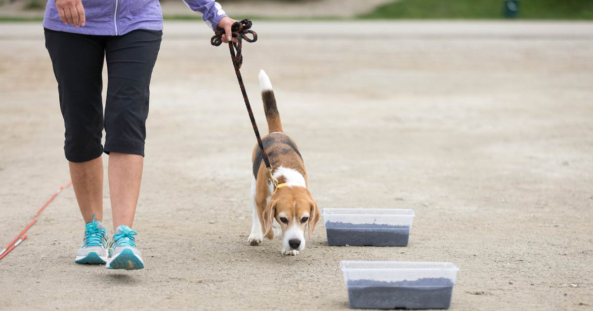 What You Need to Know About AKC Scent Work