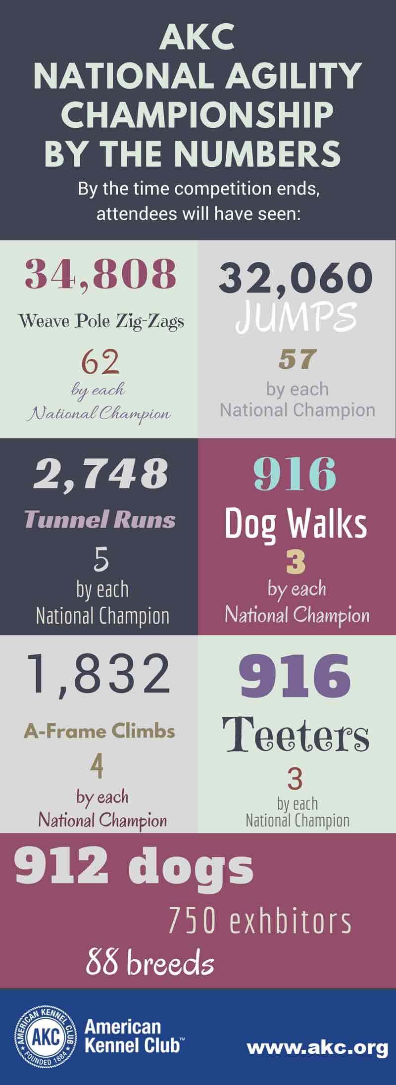 agility infographic