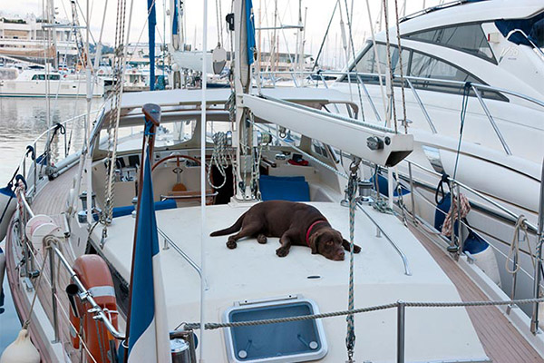 chocolate-lab-asleep-on-boat-approved