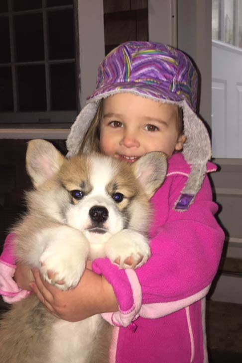 girl with pembroke welsh corgi puppy