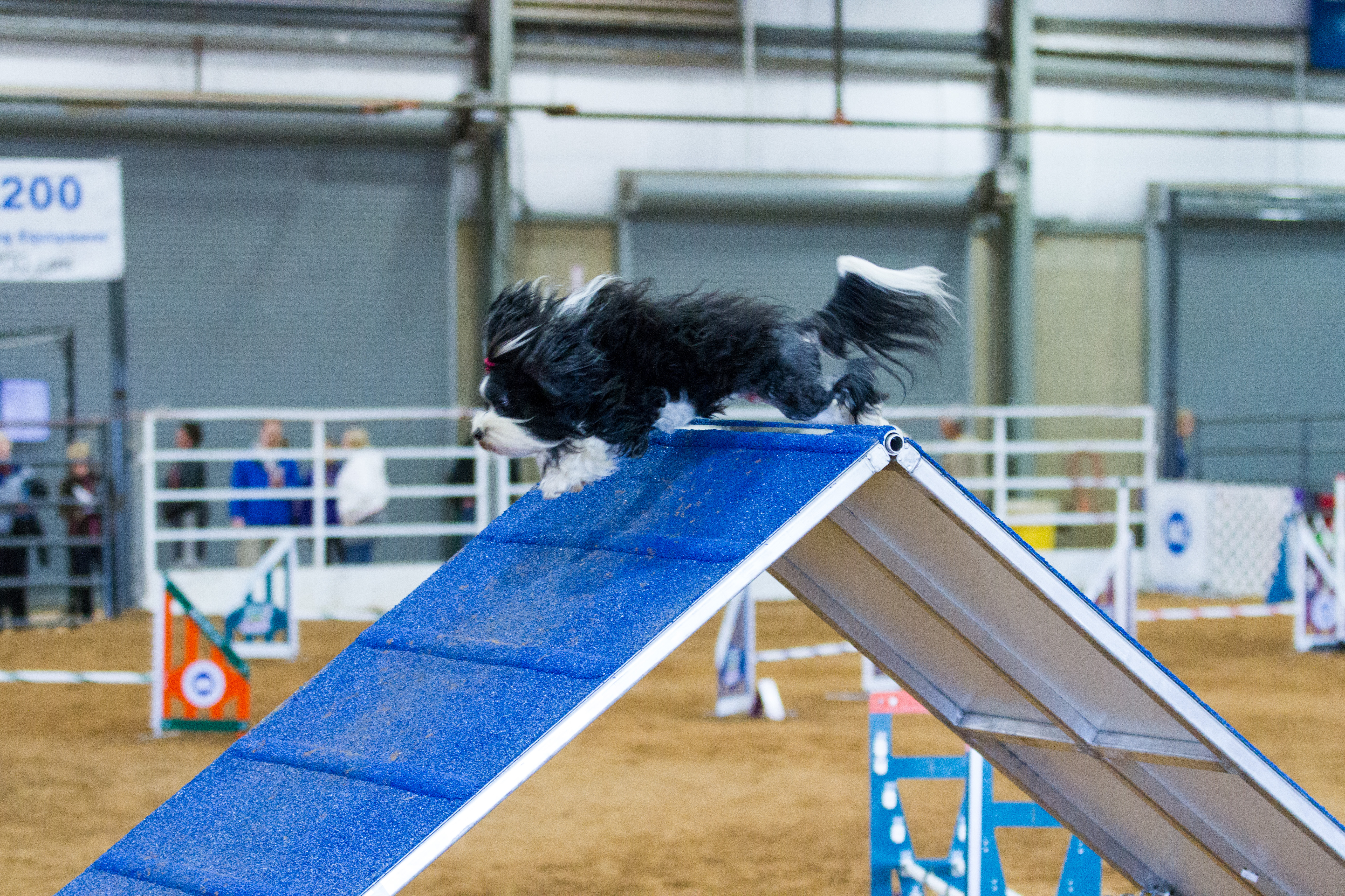 Dog Agility Competition FAQ: What You Should Know About the Sport