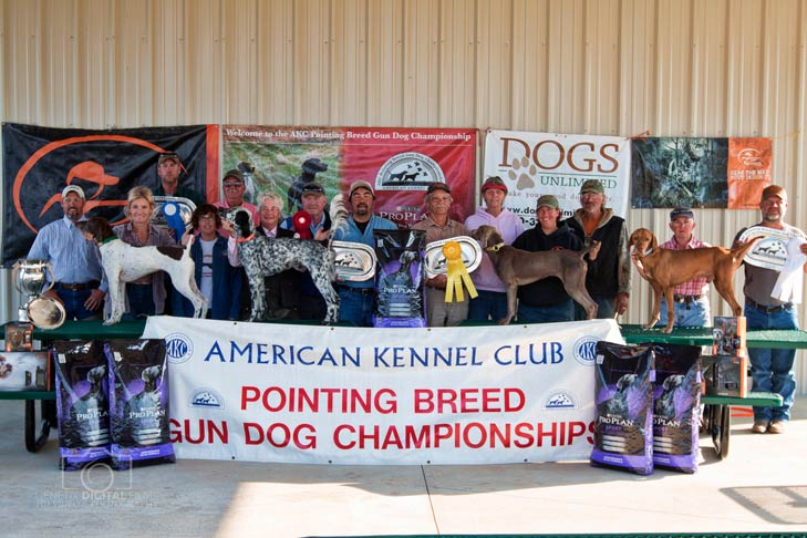 nova gun dog winner